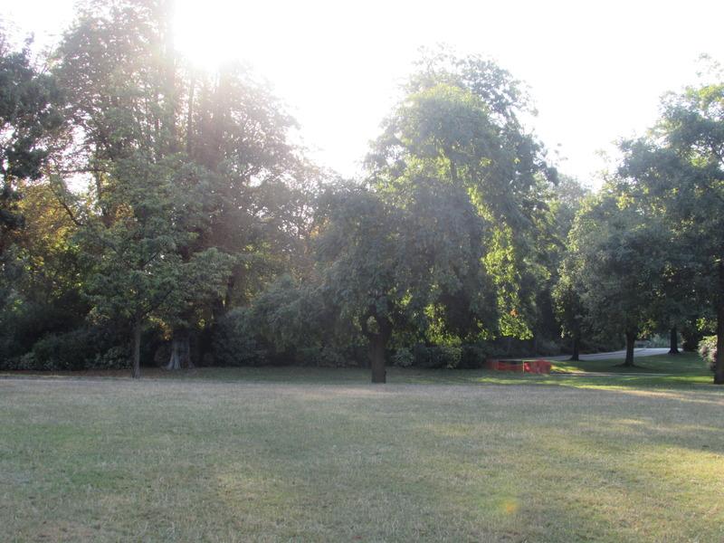 Frêne du parc Montsouris