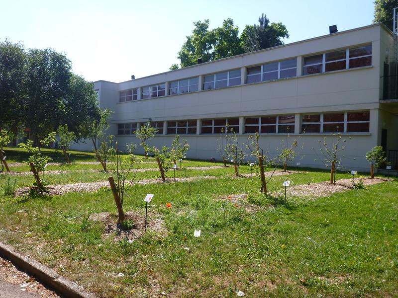 verger école Maurice d'Ocagne juin 2015