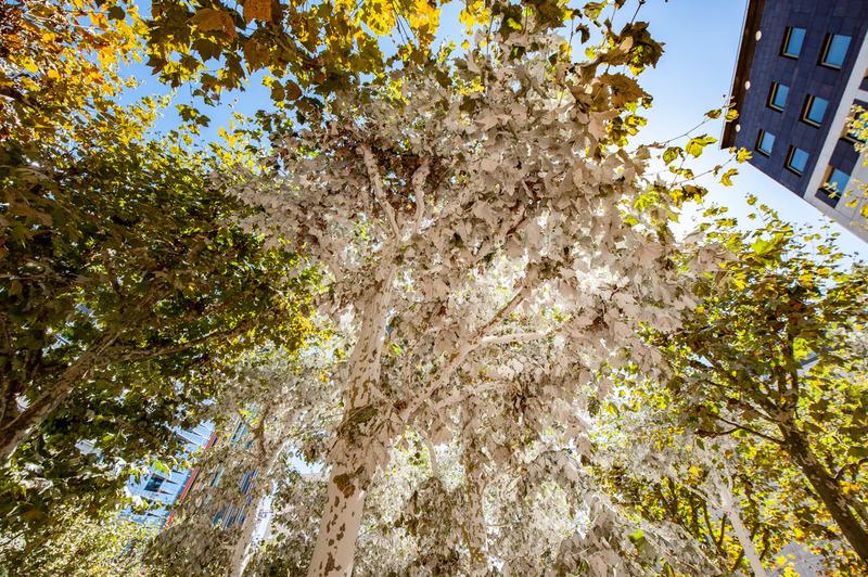 Vincent Lamouroux recouvre d'un voile de chaux, de farine et de sucre une sélection de plusieurs arbres de l'esplanade de La Défense.