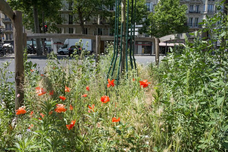 Pied d'arbre végétalisé. Rue du Télégraphe (20e)