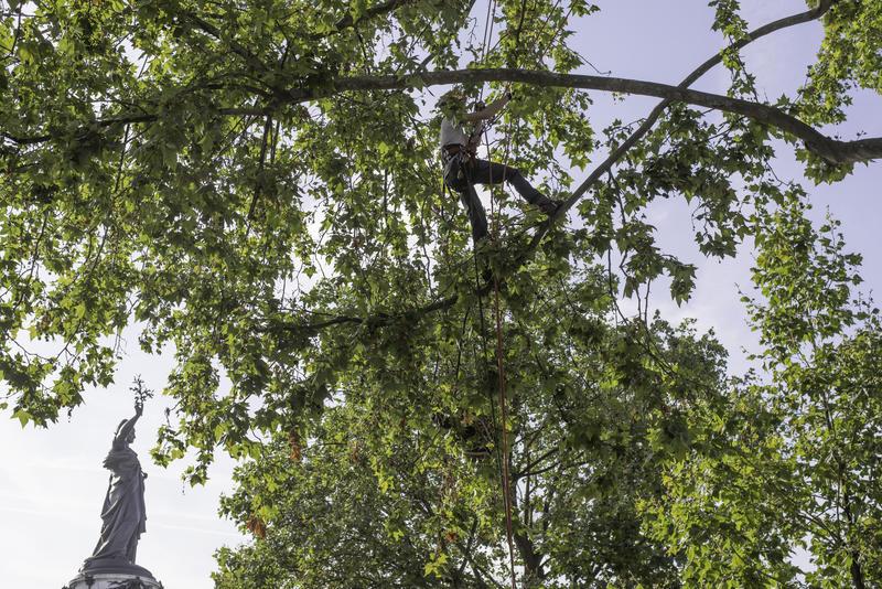 Test de résistance des arbres place de la République