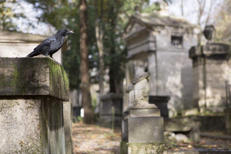 Oiseau cimetière de Père Lachaise