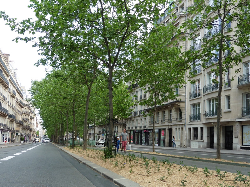 Transformation du Boulevard Raspail