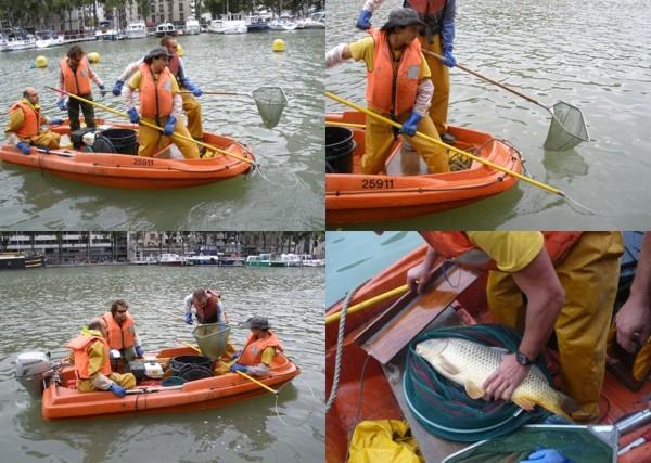 Pêche électrique sur le bassin de la Villette