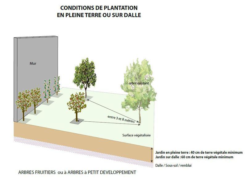 Des arbres dans mon jardin : conditions de plantation en pleine terre ou sur dalle