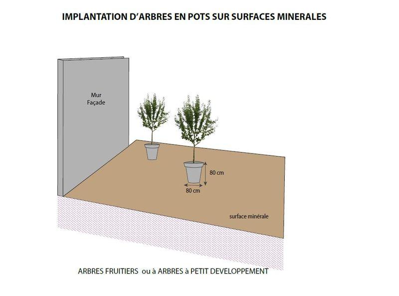 Des arbres dans mon jardin : implantation d'arbres en pots sur surfaces minérales