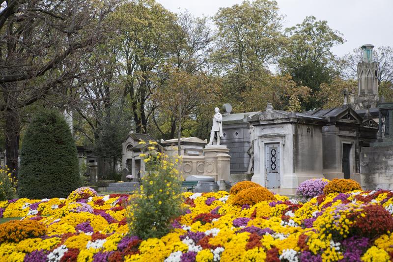 Chrysanthème toussaint
