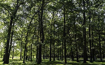 Forêt de chênes - Chemin de l'évolution