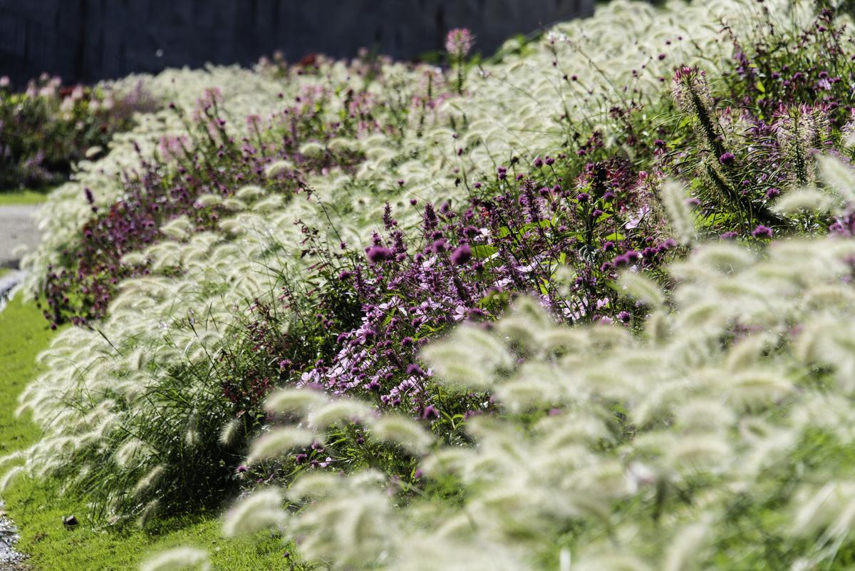Botanique fleurs