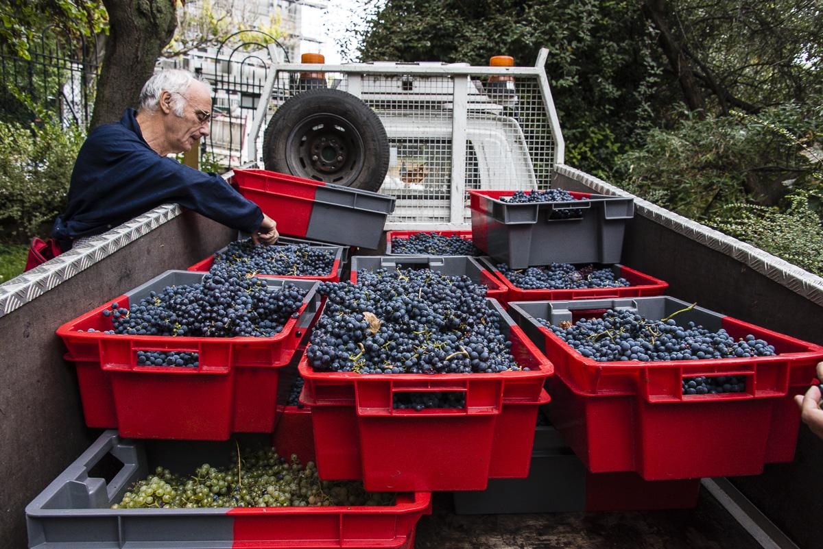 Le camion rempli de caisses de raisins