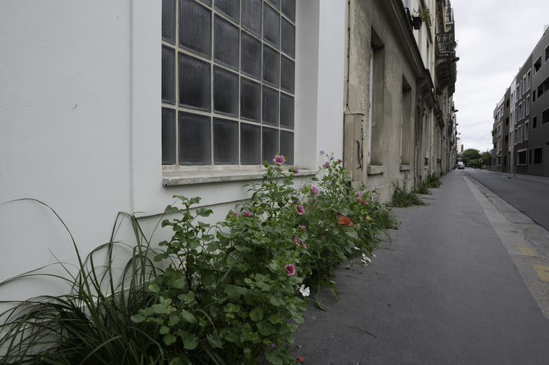 Fosse de plantation, Rue Coulmiers