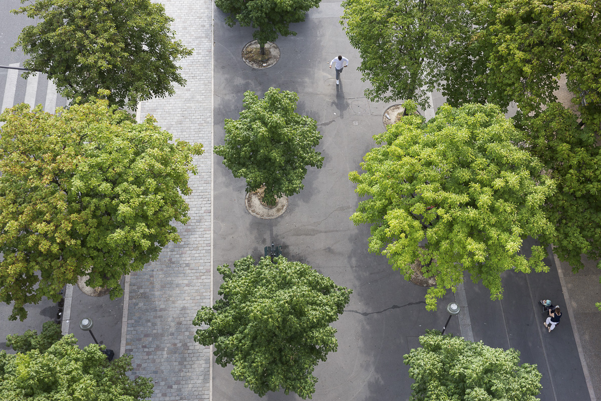 L'avenue du Trône végétalisé