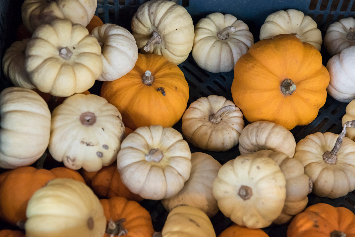 La boutique des légumes et fruits incompris