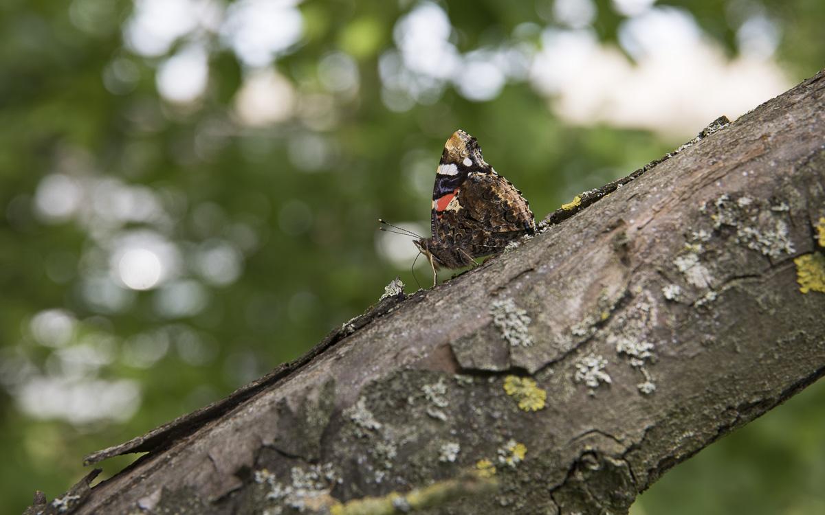 Papillon sur une branche