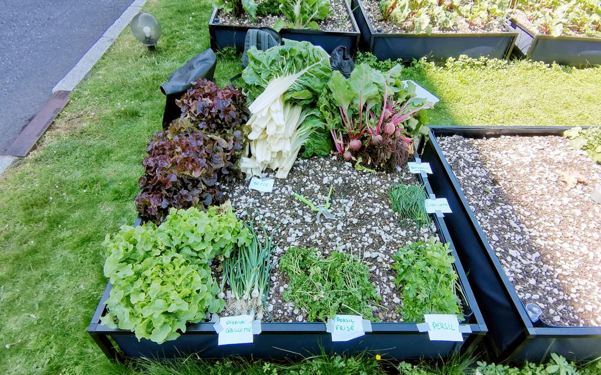 Salades et légumes