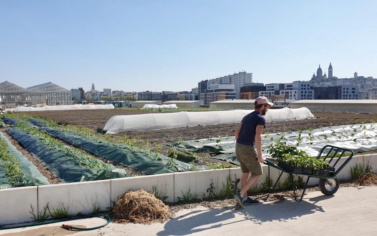 Parisculteurs ferme urbaine Parisculteurs Cultivate, sur la toiture de la halle de fret Chapelle International dans le 18e