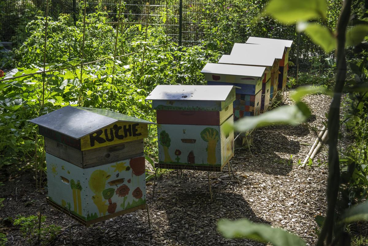 Enfilade de ruches