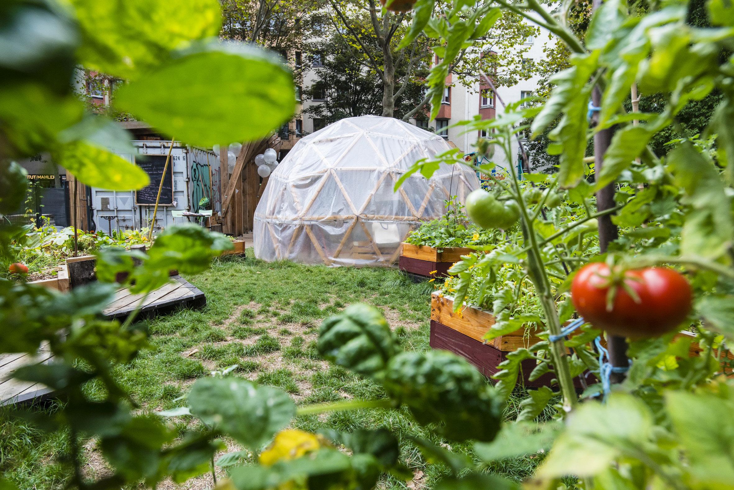 Tomates au premier plan avec serre en forme d'igloo.