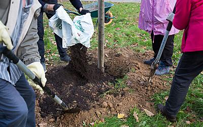 """Plantation d' un arbre dans le jardin Emmanuel Fleury par les habitants du quartier avec l' aide de l' association """" Vergers Urbains"""""""