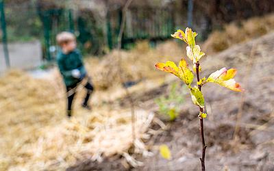 Arbuste planté dans le cadre d'une foret urbaine Miyawaki