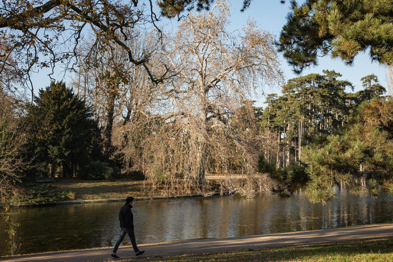 Platane d'Orient (Platanusorientalis), Bois de Boulogne, Circonférence:355cm, Hauteur: 26m.
