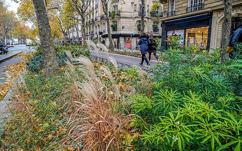 Avenue Daumesnil Végétalisation et plantation d'arbres