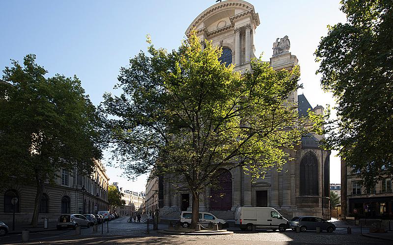 L'orme trône fièrement devant l'église Saint-Gervais-Saint-Protais