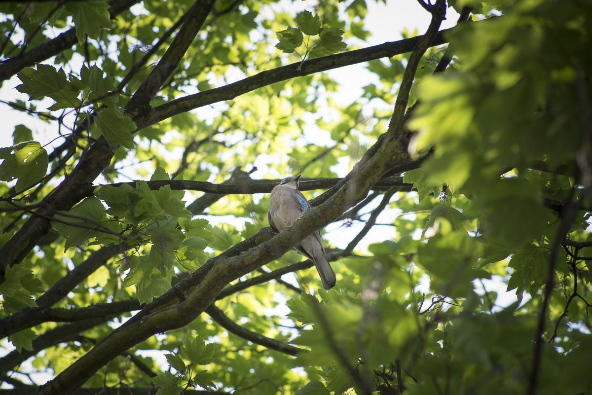 L'arbre, un lieu de refuge pour les habitants du parc