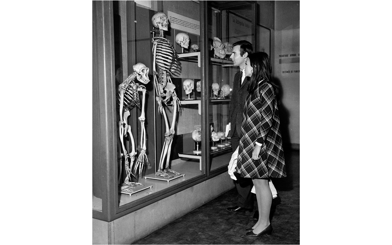 Squelettes de singe et d'homme côte à côte. Paris, Musée de l'homme, décembre 1967.