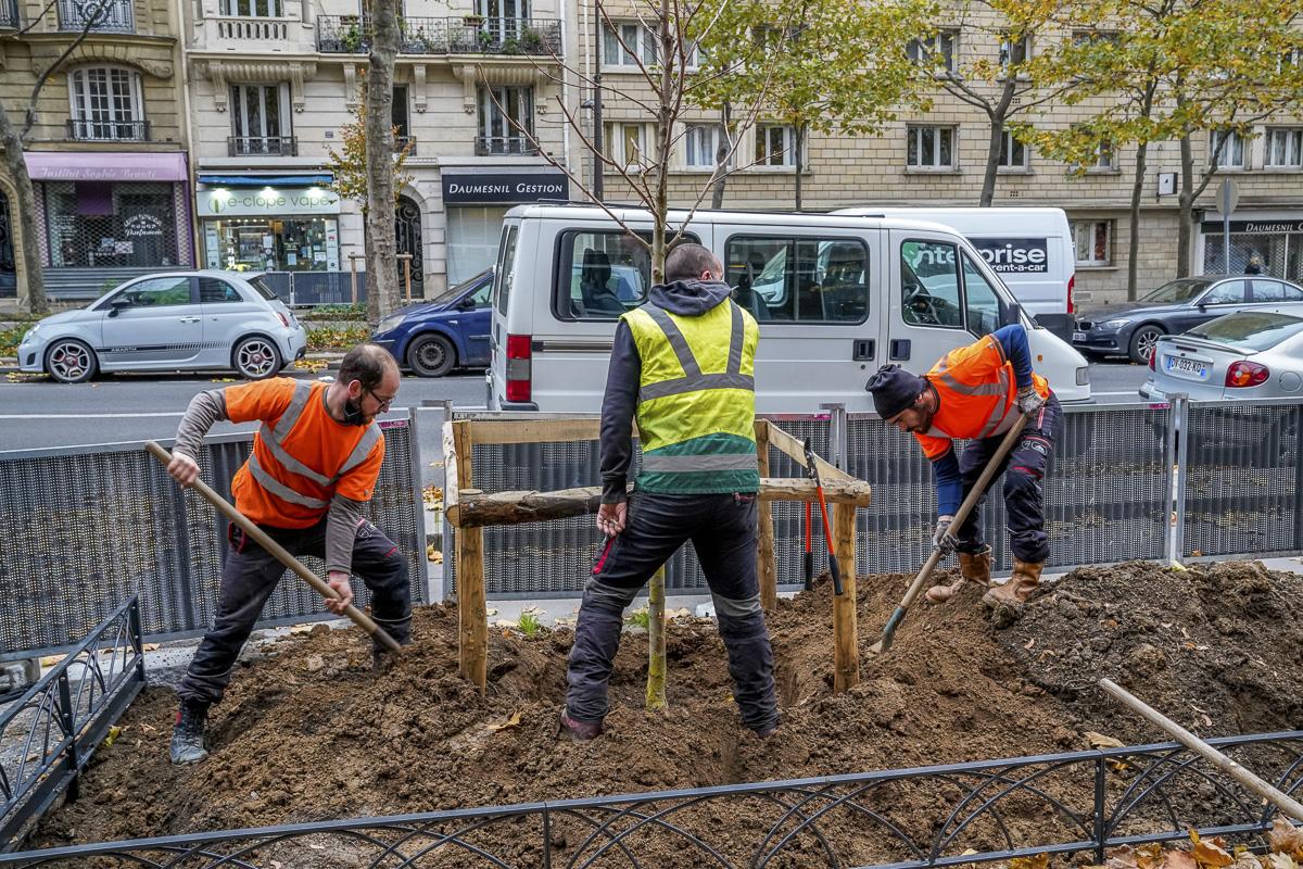 3 employés de la Ville plantent un arbre Avenue Daumesnil