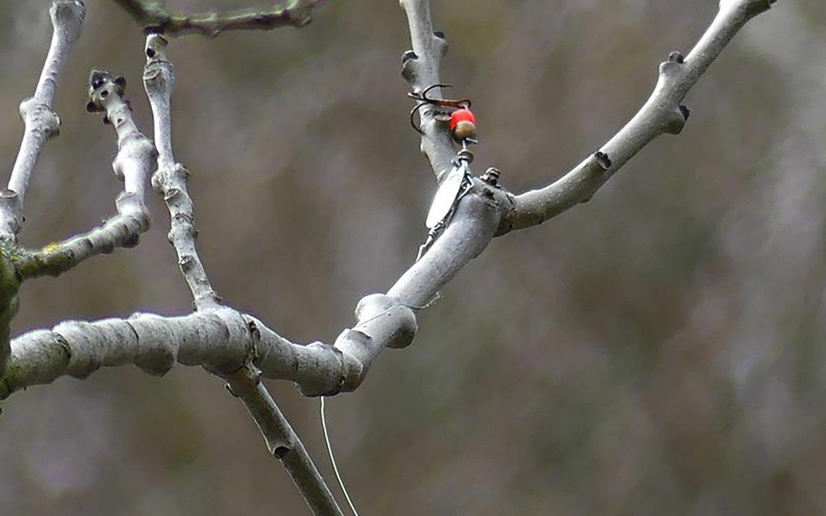 Hameçon de pêche abandonné dans un arbre