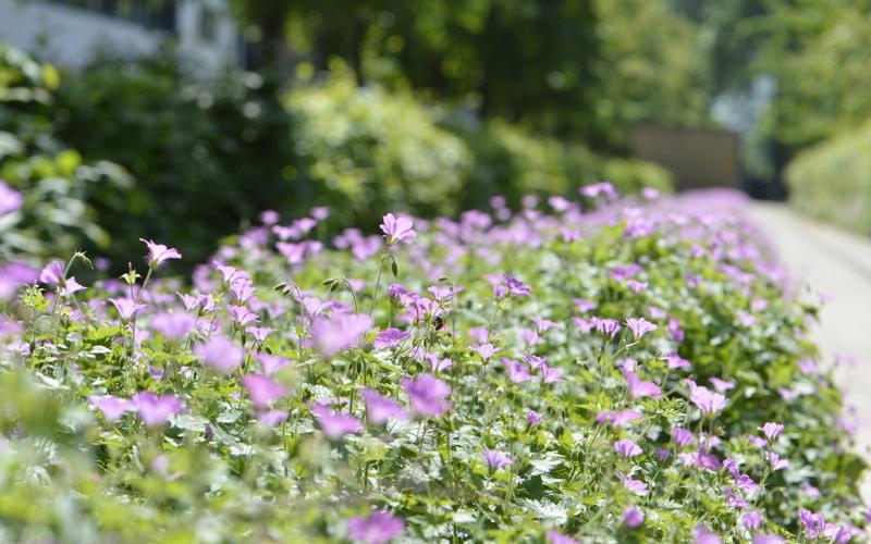 Parc de Bercy 12e une haie de fleurs en perspective