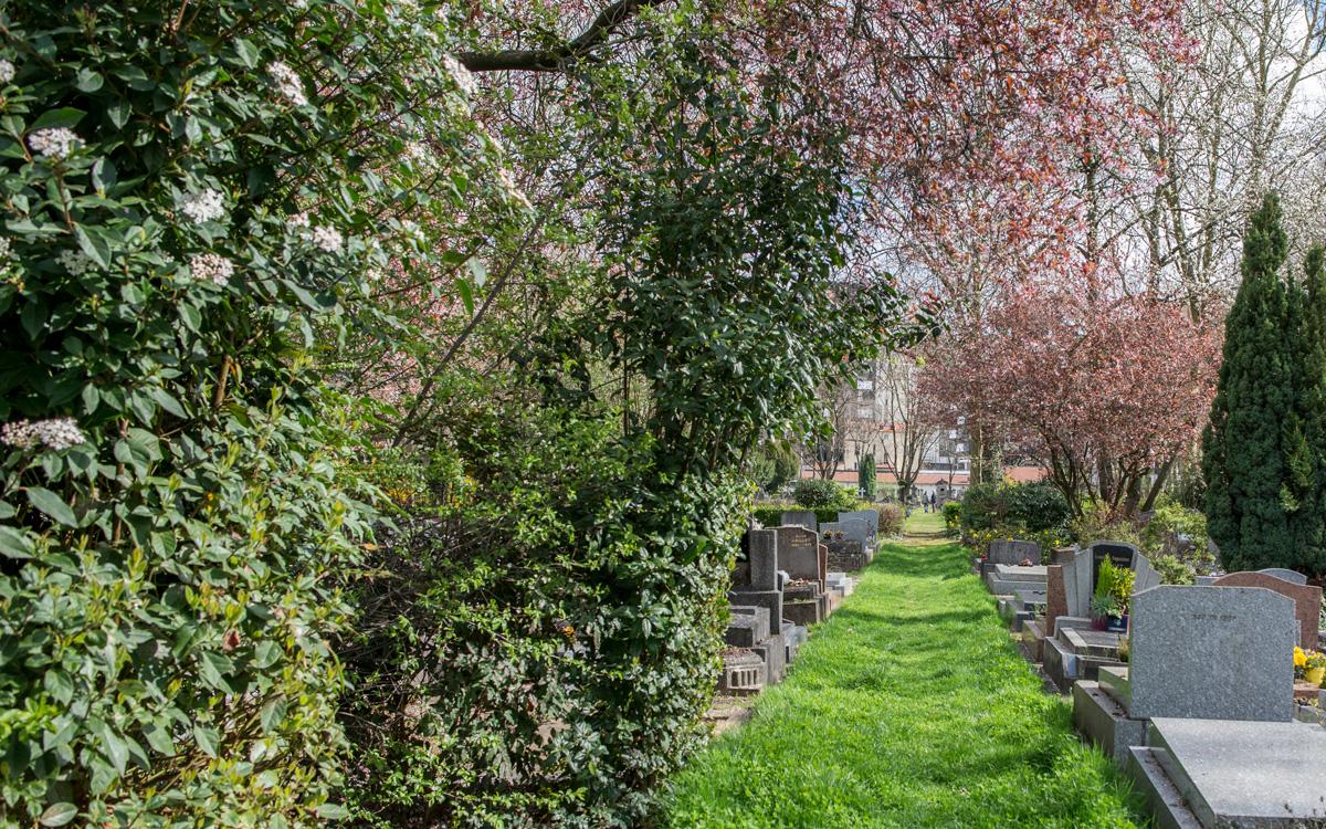 Une allée enherbée, plantée et semée du cimetière parisien d'Ivry