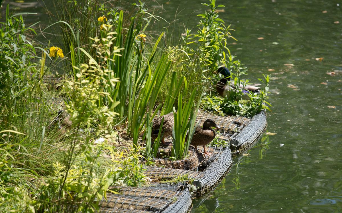 Radeau végétalisé sur le Canal Saint-Martin.