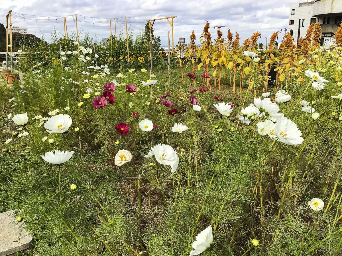 Debré -Ferme Florale Urbaine, Paris Culteurs 2021