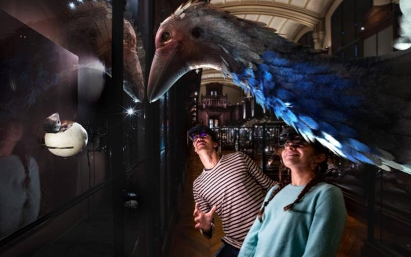 Revivre, les animaux disparus en réalité virtuelle - Aepyornis ou oiseau éléphant