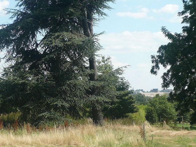 La vue sur le château de Versailles depuis l'Arboretum de Versailles-Chèvreloup