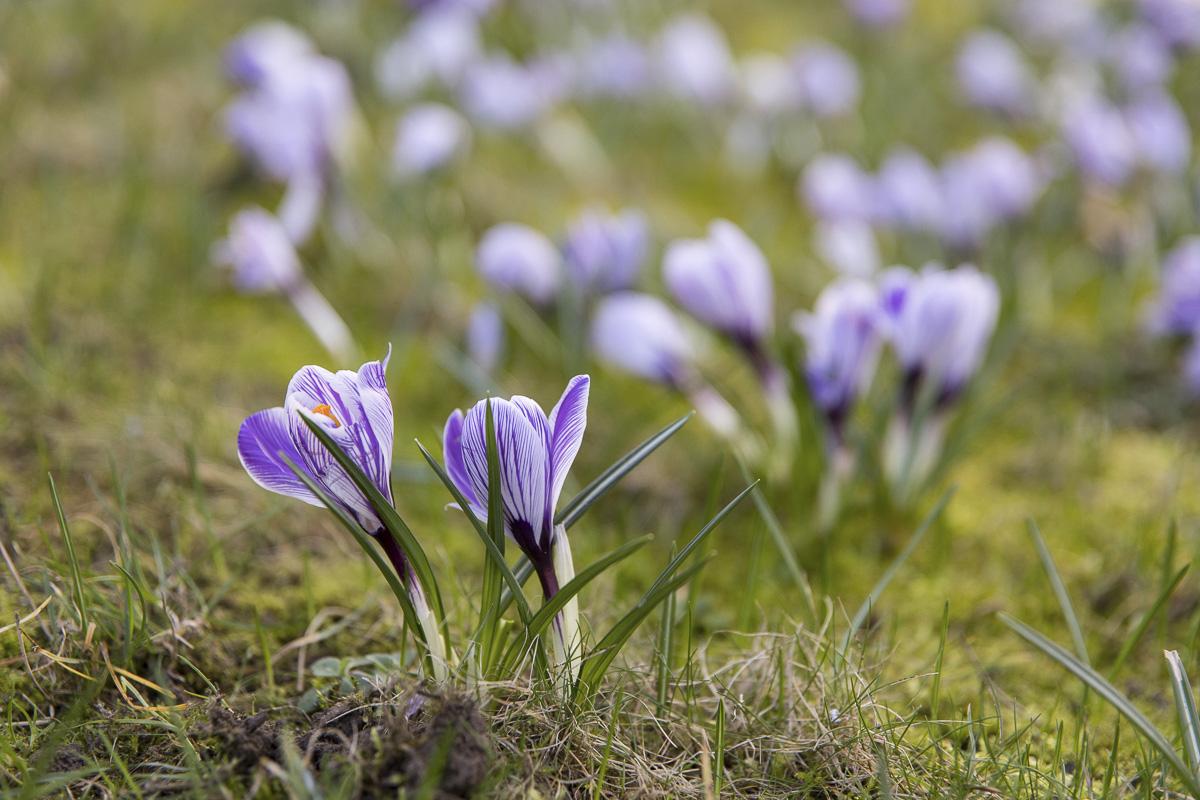 L'éclosion des fleurs au printemps.