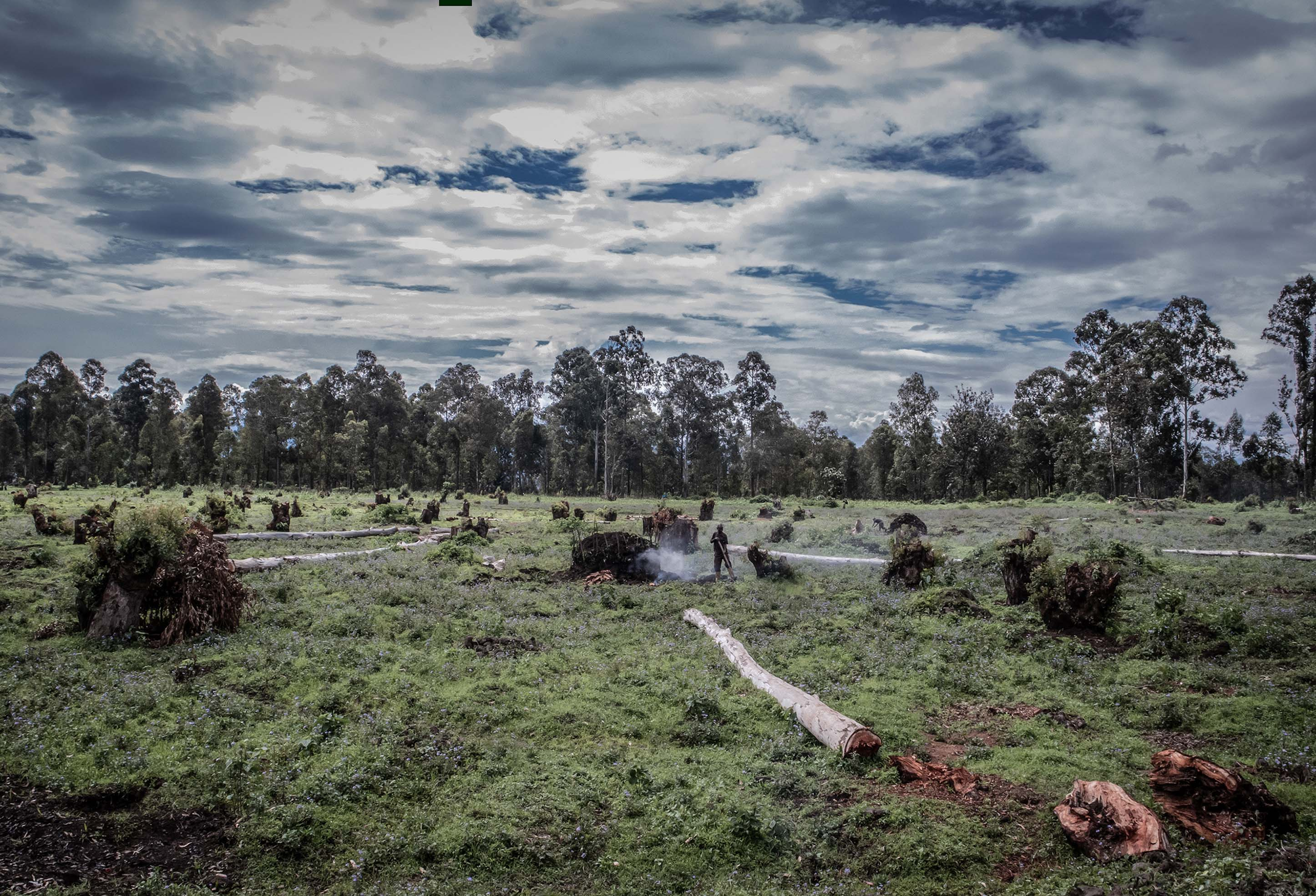 """Exposition """"Les forêts du Kivu"""""""