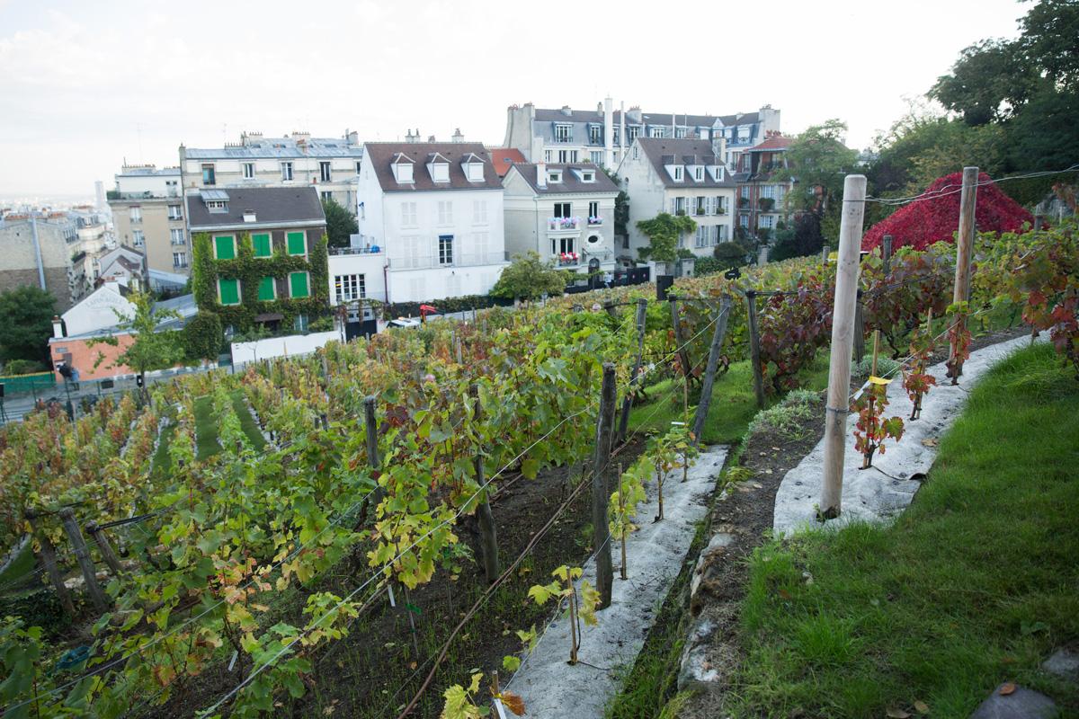 Montmartre et ses vignes