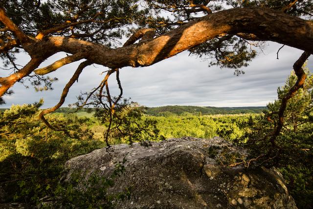 La forêt des Trois Pignons dans le parc naturel du Gâtinais