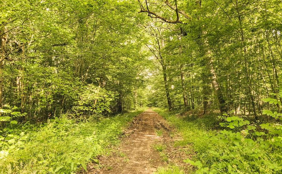 La forêt de Barbeau