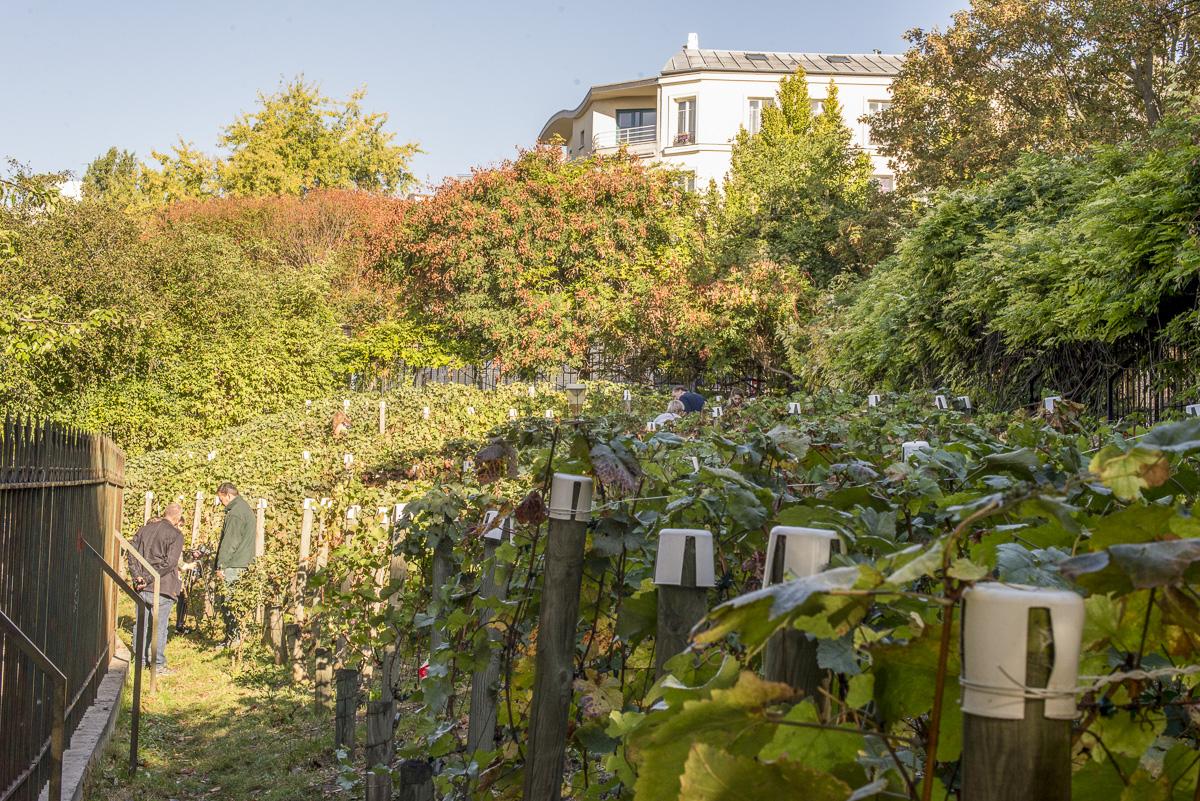 Les Vignes de Belleville