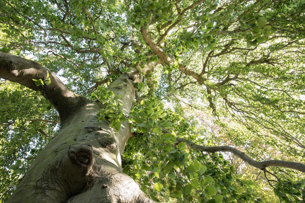 Árbol del parque Bagatelle