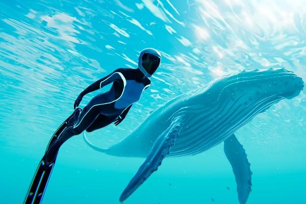 Carte blanche à la Canopée : exploration sous-marine  