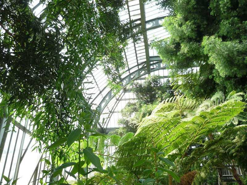 Serre Jardin des Plantes de Paris