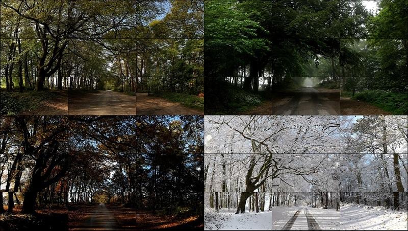 The Fours Seasons, Woldgate Woods, 2010-2011 (Spring 2011, Summer 2010, Autumn 2010, Winter 2010) (36 vidéos) Nouveaux médias 205,70 x 364,40 cm Durée : 4:21