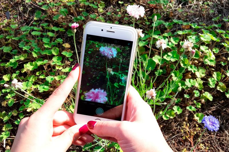 Publiez les photos de vos plantations sur Instagram