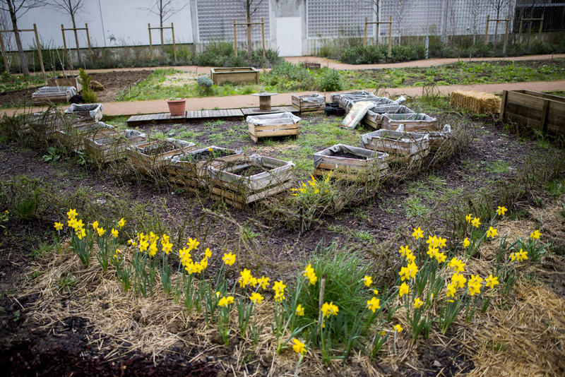 Jardin partagé Cambrai (19e)
