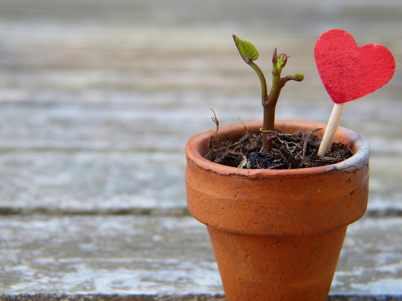 Proteger ses plantes